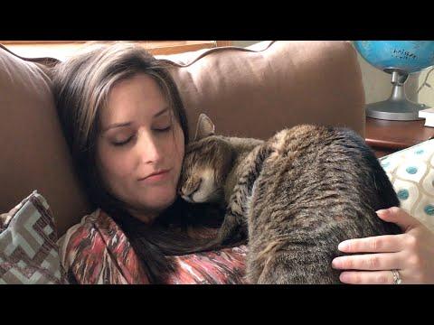 KITTIES REACT TO PREGNANCY