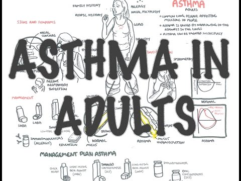 Adult Asthma – Overview