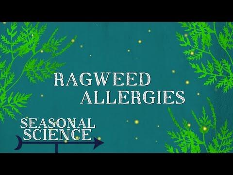 Ragweed Allergies | Seasonal Science | UNC-TV