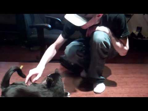 Professor Meowingtons Workout Video