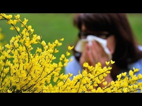 Why Are Some Adults Developing Allergies?