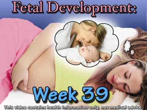 Fetal Development Week 39 (Pregnancy Health Guru)